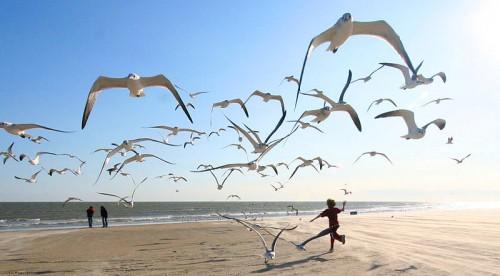Flock_of_Seagulls_800