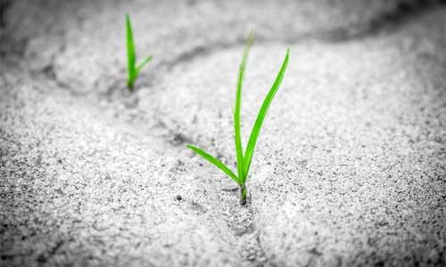 need-to-grow-drew-simmie